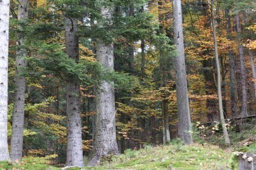 IMG_1510 dziewicze lasy